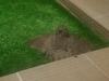 Un búho en las terrazas de Montencina
